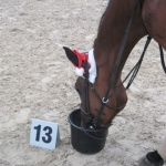 nejmilejší úkol pro koně :-)